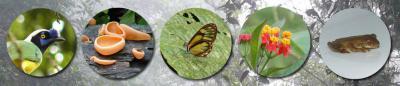 Uploaded image biodiversity_banner73.jpg