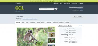 Uploaded image primates.PNG