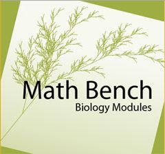 MathBench group image