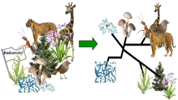 "Tree of Life: Transforming the ""parade of phyla"" into an integrated curriculum group image"