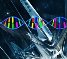 NIMBioS Tutorial: Evolutionary Quantitative Genetics