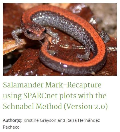 ROW - Salamander