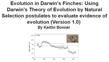 Evolution of Finches ROW