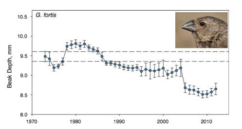 Finch beak graph