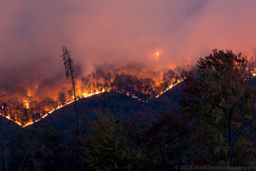 Wild Fire Image