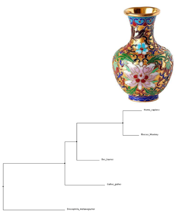 vase and phylogenetic tree