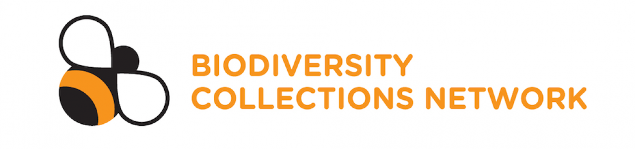 Biodiversity Collections Network logo