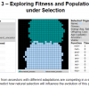 Exploring Fitness and Population Change  under Selection: Avida-Ed Lab Book Exercise 3