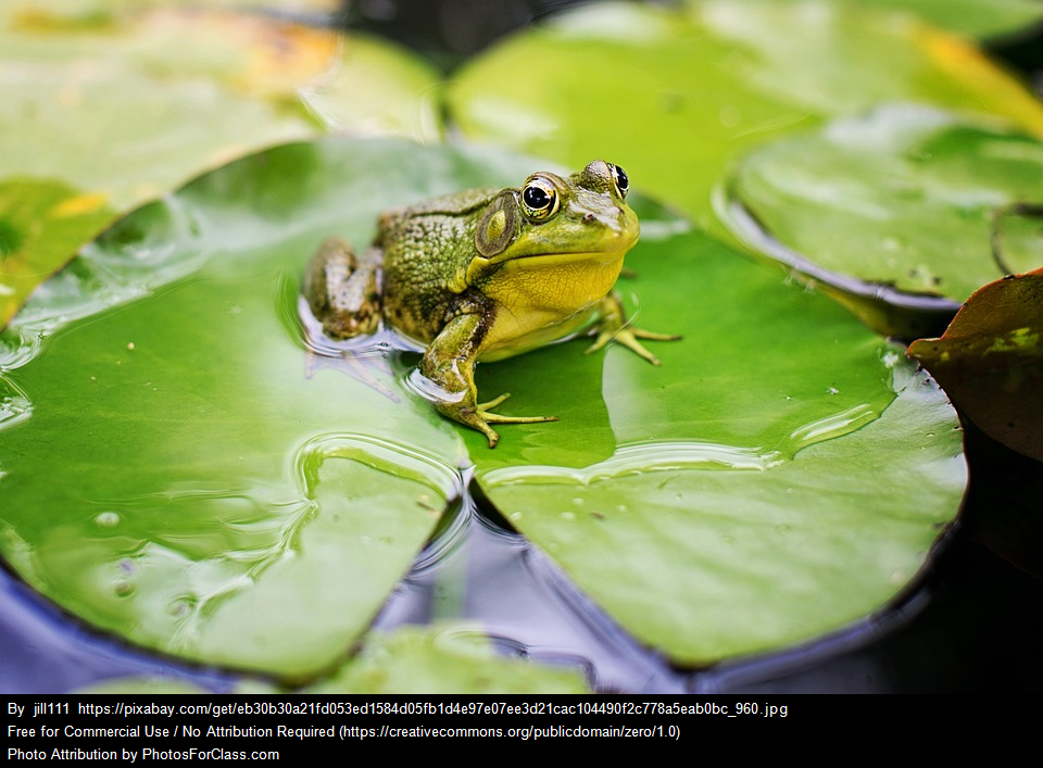 Amphibian Diversity: Species Richness and Precipitation
