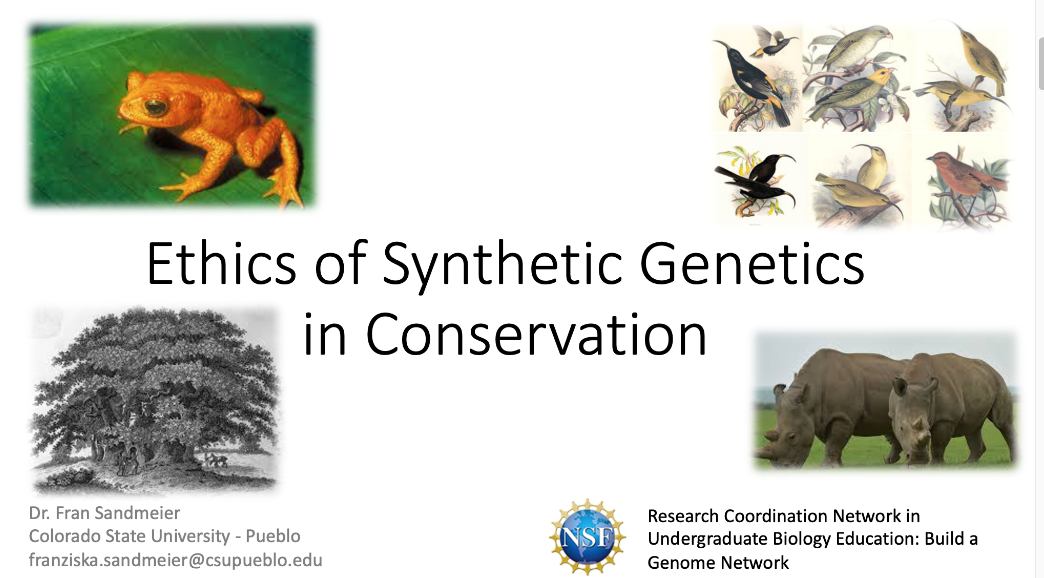 Conservation and ethics of using synthetic genetics