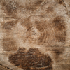 tree rings.png
