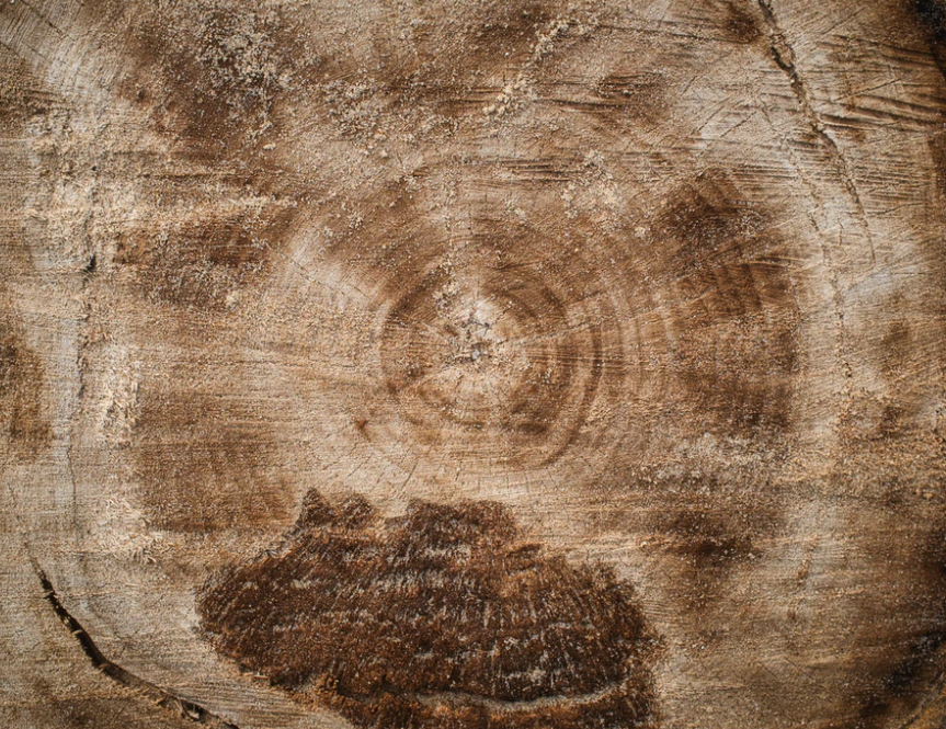 Regression: Tree Rings and Measuring Things