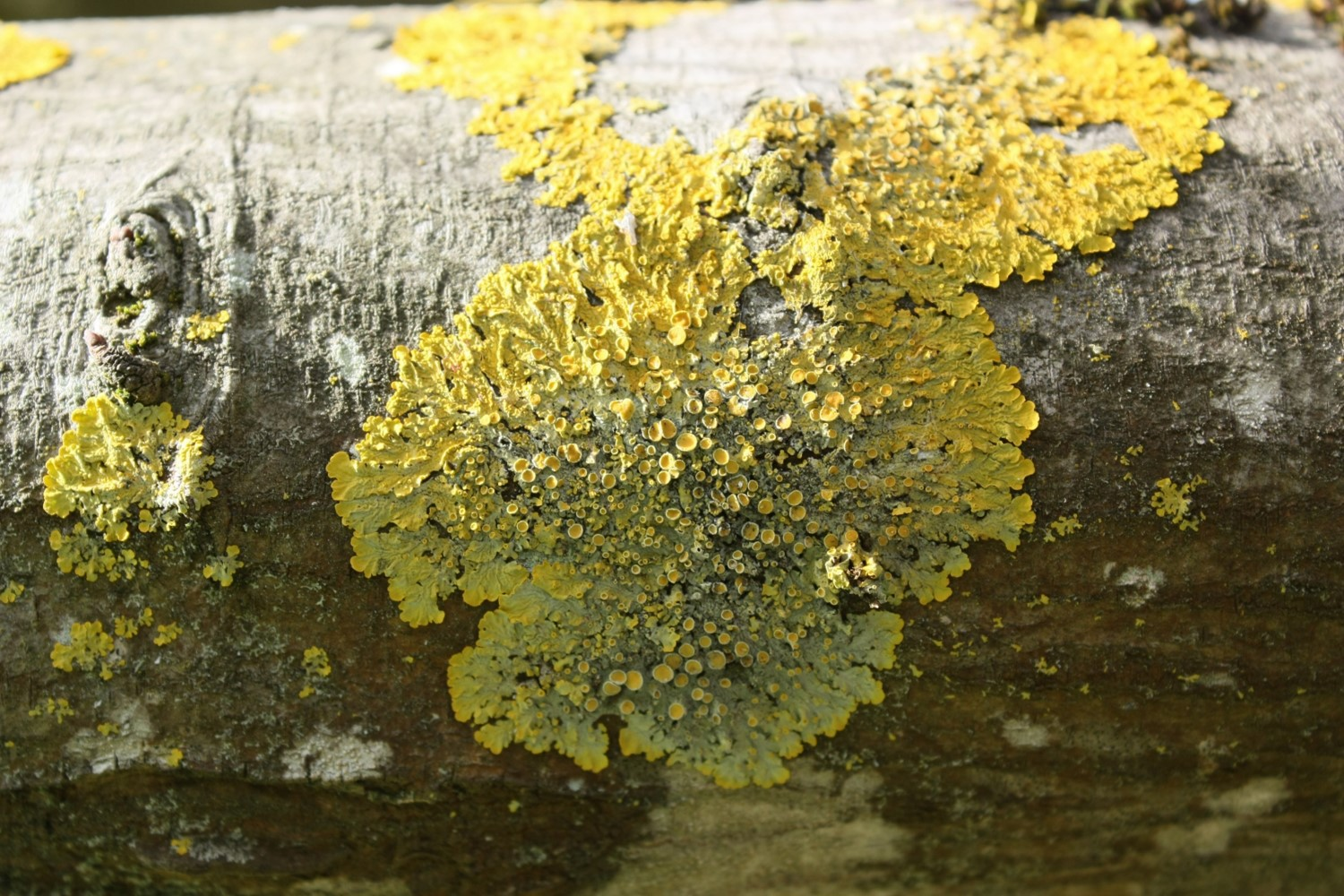 Lichen Niches and Distributions Lab Activity