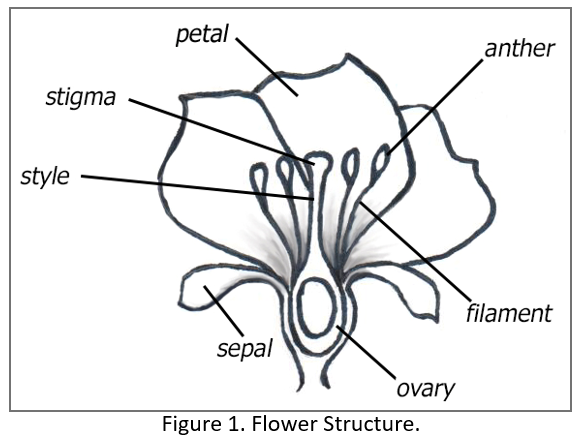 The Evolution (and Coevolution) of Flowering Plants